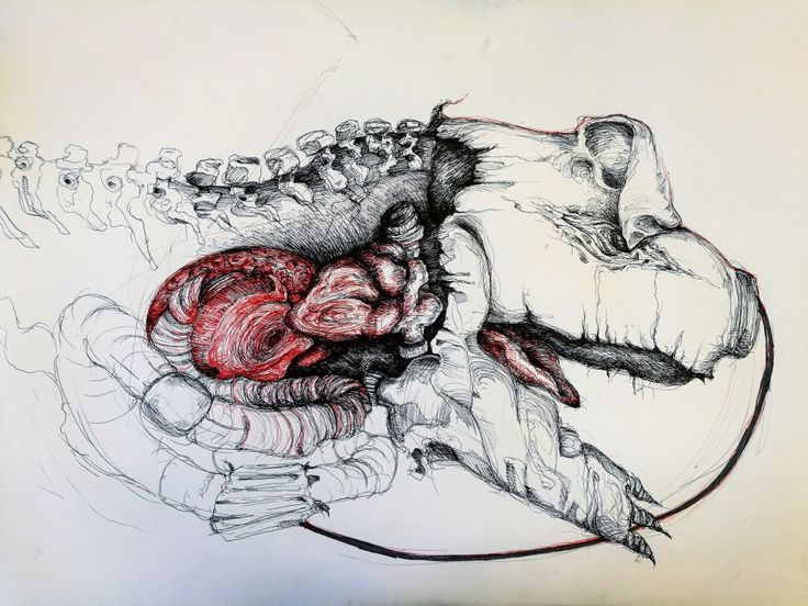 Ink drawing of dead pig,  art with still life and my imagination by Magdalena Leszczyniak