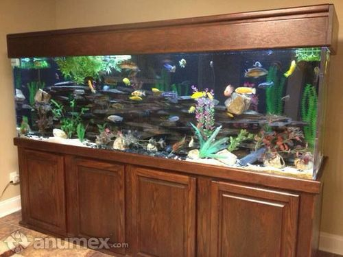 1000 images about aqu rios aquarium on pinterest for 125 gallon fish tank stand