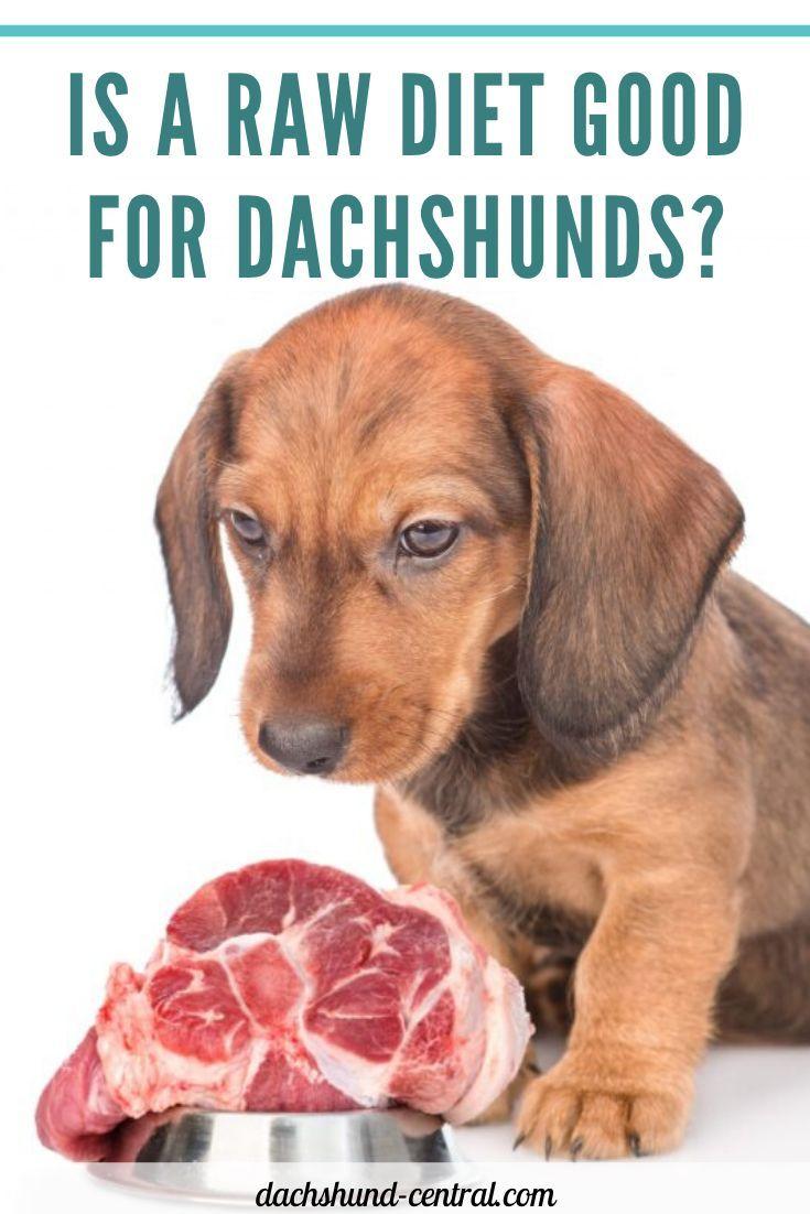 Dachshund Puppies Food Dachshund Puppies Dackel Welpenfutter