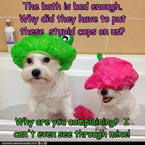 Everything Your Dog Knows About Bath Time - TO TOP IT ALL OFF - Dogs, Pet Photo Special : People.com