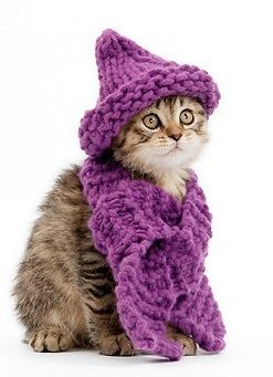 Cat wearing.. scarf and hat……..SHE LOVED WEARING THIS HAND-KNITTED (WITH LOVE, I MIGHT ADD) ENSEMBLE DOWN TO THE PURPLE PETUNIA-PEONE PATCH……..WE WERE ALWAYS WORRIED SHE MIGHT CATCH PNEUMONIA OR GET PLEURISY, SO MOMMA GOT OUT HER TRUSTY KNITTING NEEDLES AND THIS PURPLE WONDER WAS THE RESULT……….MEOW (!!!)……….ccp