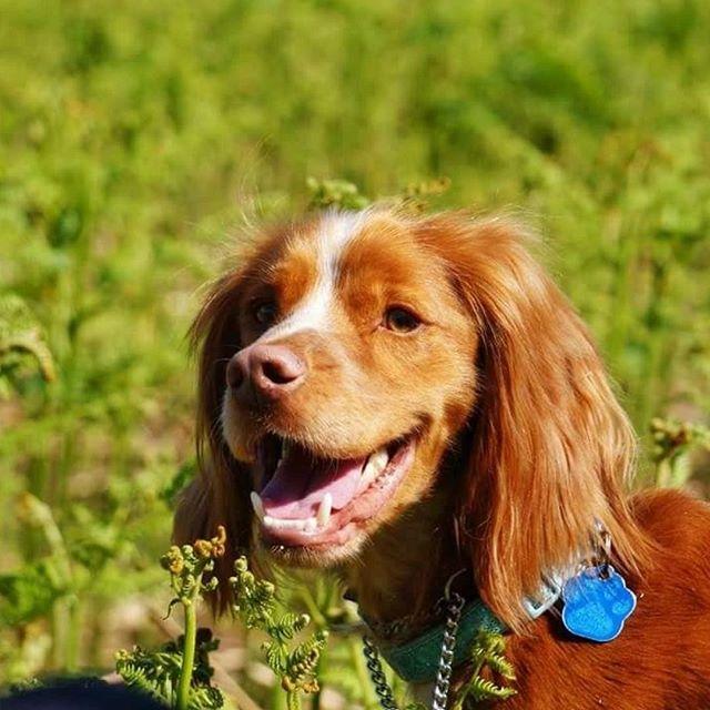 Dog Friendly Near Windermere