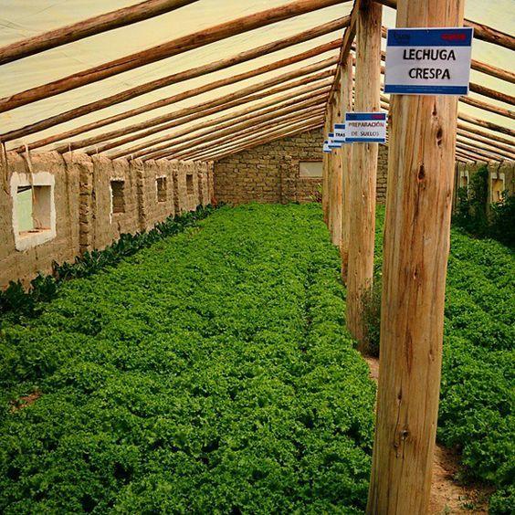 Best 25+ Underground Greenhouse Ideas On Pinterest