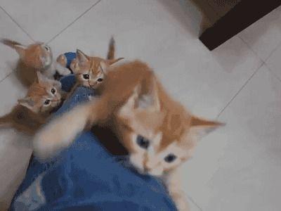 Omg it's a kitten attack