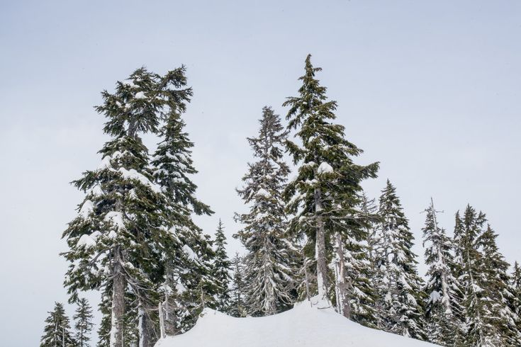 http://www.patchwmedia.com/heycoasty/sleddingbaker  #baker #mtbaker #shuksan #sledding #winter #adventurephotography #naturephotography #getoutside #adventure #beautiful #westcoastbestcoast