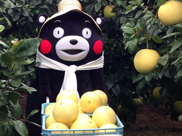 Hardworking Kumamon