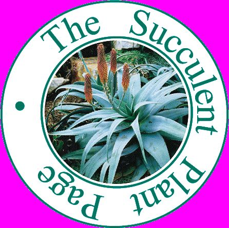 A gallery of hundreds of photos of succulent plants to show families and groups of succulents.