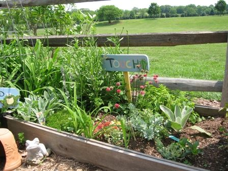 Some wonderful herbs and perennials that encourage touching. Love. I see hens and chicks, lambs ear, celosia, rubekia, and more! Love!