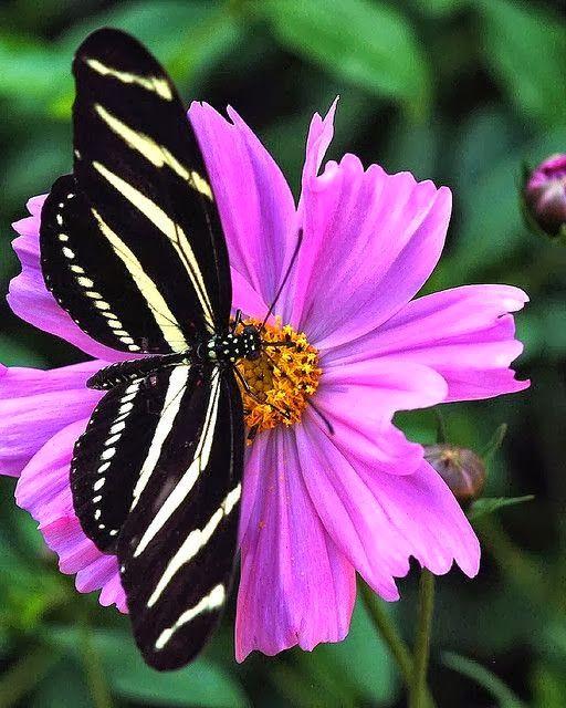 Butterfly+-Wallpaper-Background+(3).jpg (512×640)