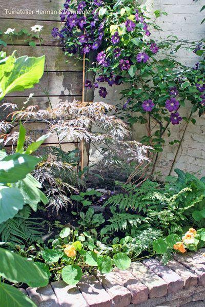 Schaduwplanten in een kleine patio stadstuin, ontwerp Tuinatelier Herman & Vermeulen.