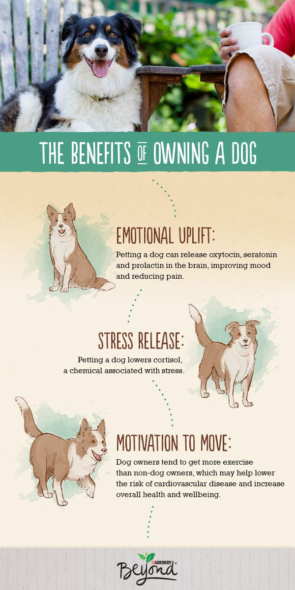 Owning a dog can be naturally good for you, and may be a ...