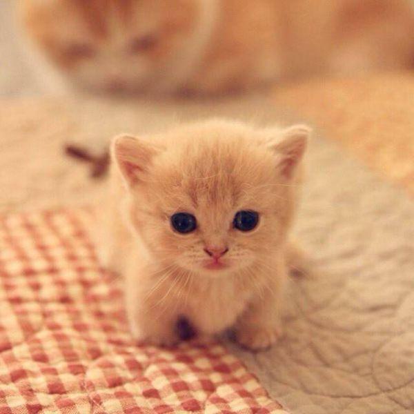 cute cat animels bayi