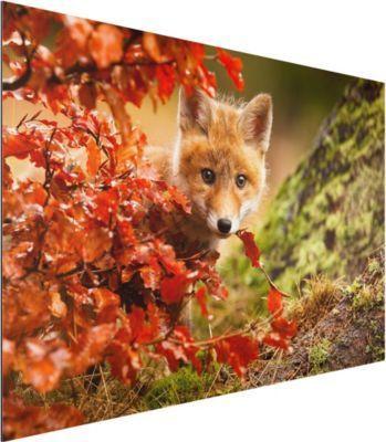 Alu Dibond Bild - Fuchs im Herbst - Quer 2:3 50x75-22.00-PP-ADB-WH Jetzt bestellen unter: https://moebel.ladendirekt.de/dekoration/bilder-und-rahmen/bilder/?uid=6fe01304-c440-578d-a3f3-0f2d526e1695&utm_source=pinterest&utm_medium=pin&utm_campaign=boards #heim #bilder #rahmen #dekoration