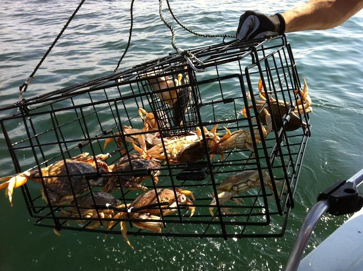 78 best crabbing images on pinterest crab boil for Crab fishing oregon
