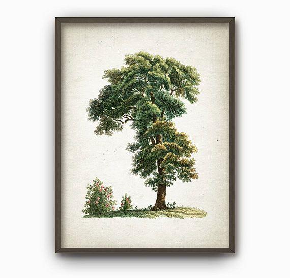 Oak Tree Antique Botanical Art Print Vintage by QuantumPrints