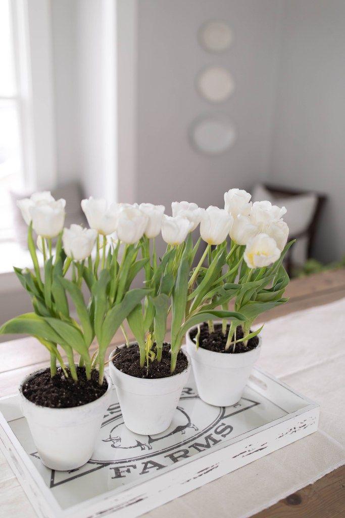 Simple Potted Tulip Centerpiece Tulip Centerpiece Farmhouse