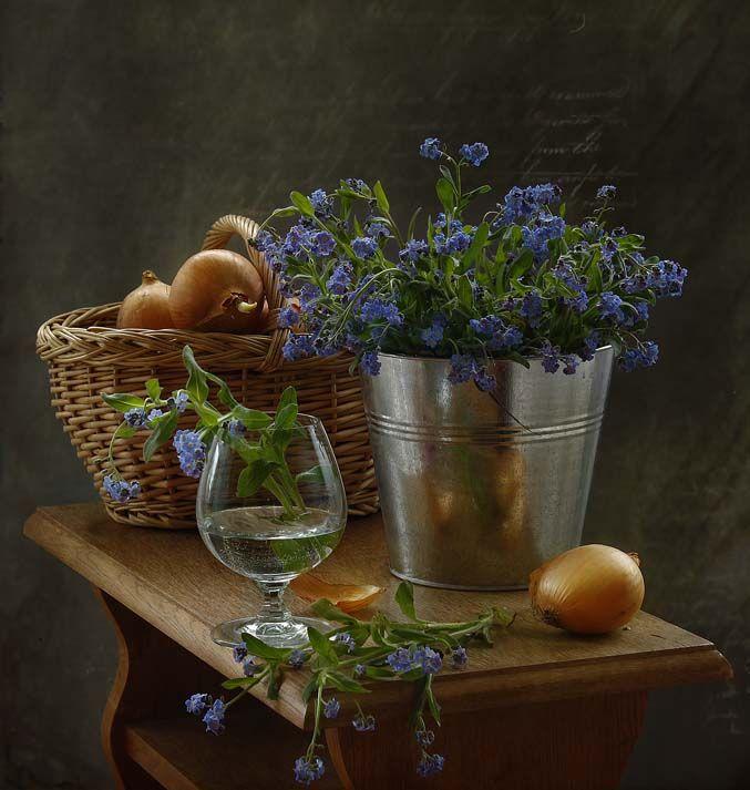 photo: натюрморт с незабудками ▩photographer: inna korobova