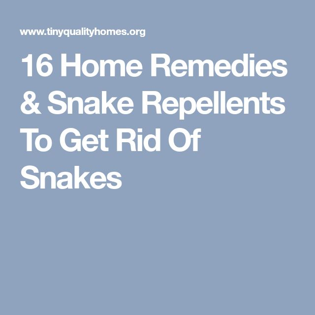16 Home Remedies & Snake Repellents To Get Rid Of Snakes