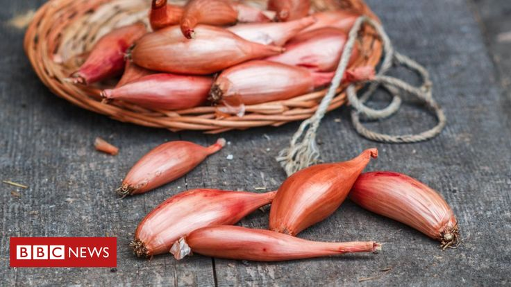 Properties in Persian shallots could boost the effects of antibiotic treatment, a study says.