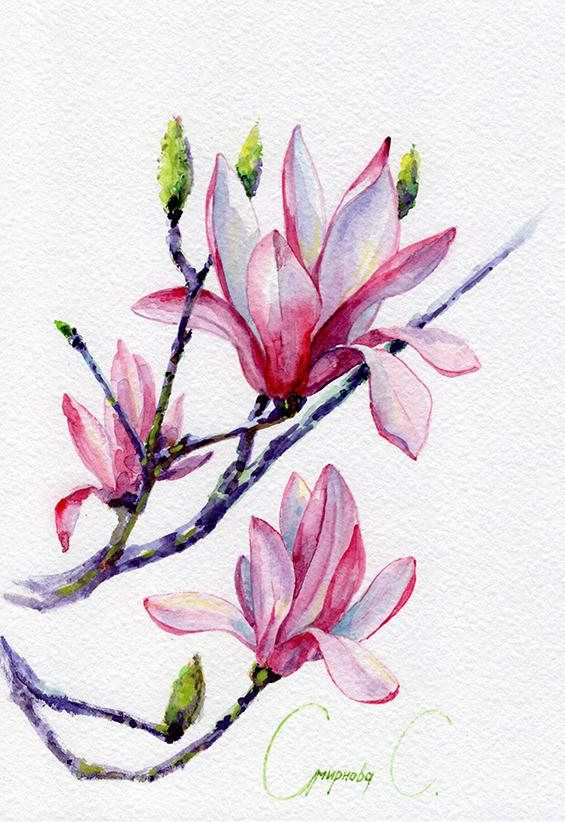 Magnolia Flowers Purple Pink Green Yellow Watercolor Flower Painting Watercolor Flowers Magnolia Flower