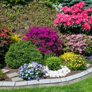 Shrubs That Grow in Shade - 10 Choices Offering Variety