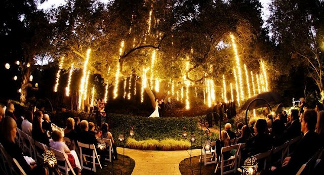 Lights under a weeping willow