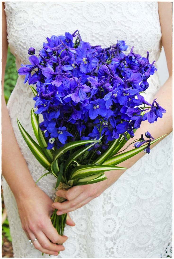 1000 ideas about delphinium bouquet on pinterest blue