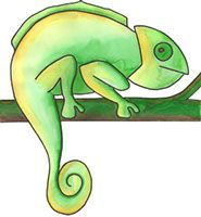 Atelier Kameleon - praktijk voor Beeldende Therapie