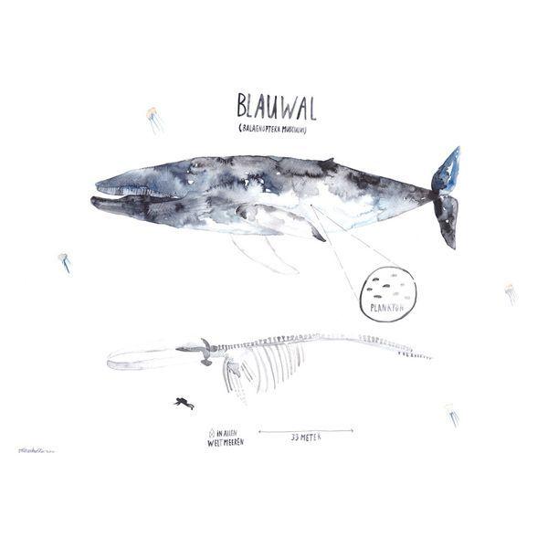 15 best Wal-Geschenke images on Pinterest | Wale, Fische und Blauwal