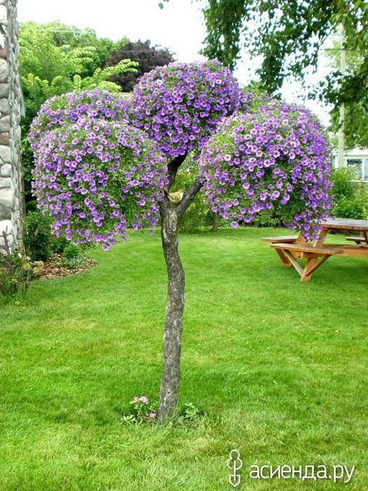 25 for Arboles de flores para jardin