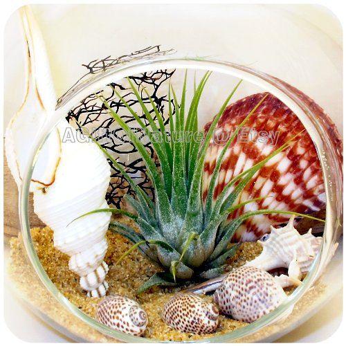 Air Plant Gift Beach Lovers Hanging Terrarium Kit by AGiftofNature, $23.00