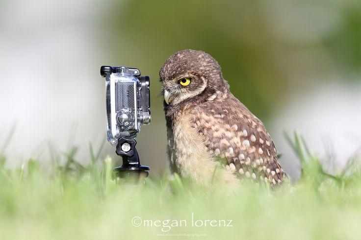 Selfie Master by Megan Lorenz
