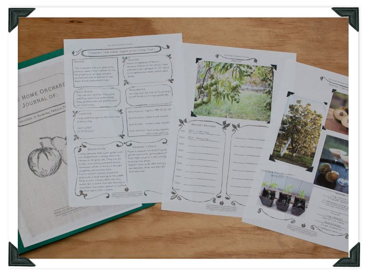 We've made a free template for a HOME ORCHARD JOURNAL for you to download. Do you keep a record of the fruit trees you plant? or know someone else who might like to make an ORCHARD JOURNAL? Follow the link to read the blog and check out before and after photos of my crazy orchard notebook