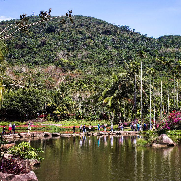 Yanoda Rainforest, Hainan Island, China / Тропический лес Янода, остров Хайнань, Китай