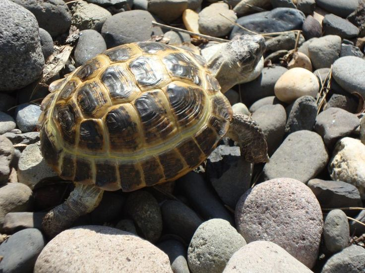 1000 Images About Turtles On Pinterest Sea Turtles