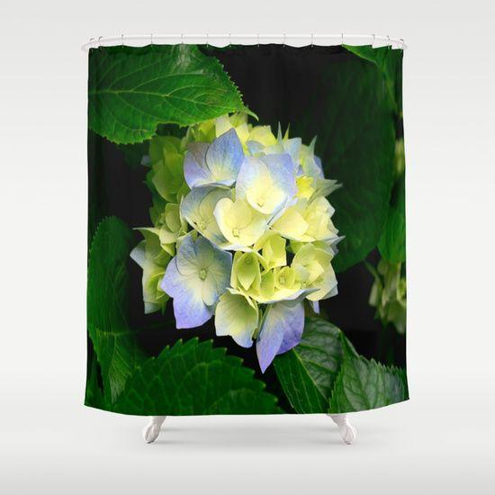 Flower, Colour, Plant, Nature.