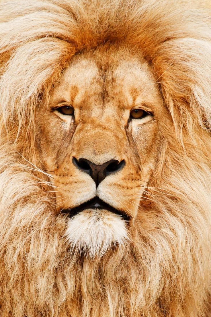 Do you dream of getting up close and personal with the world's most majestic animals? This list will have you booking a trip faster than you can say &qout;lion!&qout;