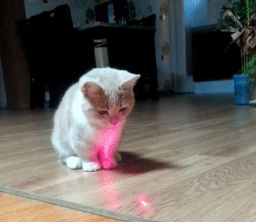 Luring The Red Dot