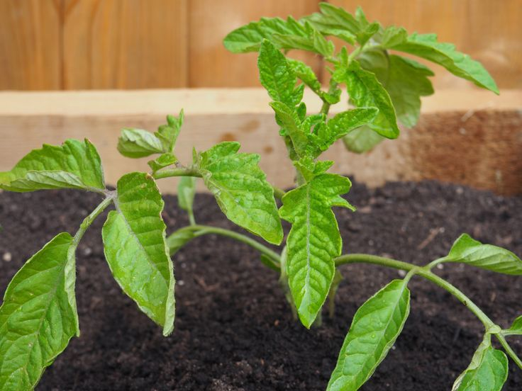 So the day has finally come, and we have planted everything we want to grow in the garden. Well, almost everything. The plants we grew from seeds just visit the garden during the day, but come in a…