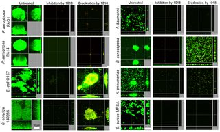 PLOS Pathogens: Broad-Spectrum Anti-biofilm Peptide That Targets a Cellular Stress Response