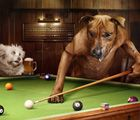 """Dogs Playing Pool: Artist Julian Wolkenstein Takes """"The Hustler"""" from Kitsch to Cute"""