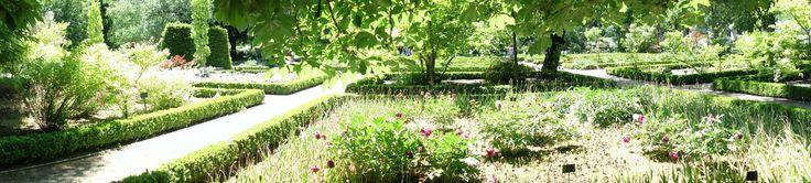 Real jardín botánico. Madrid.