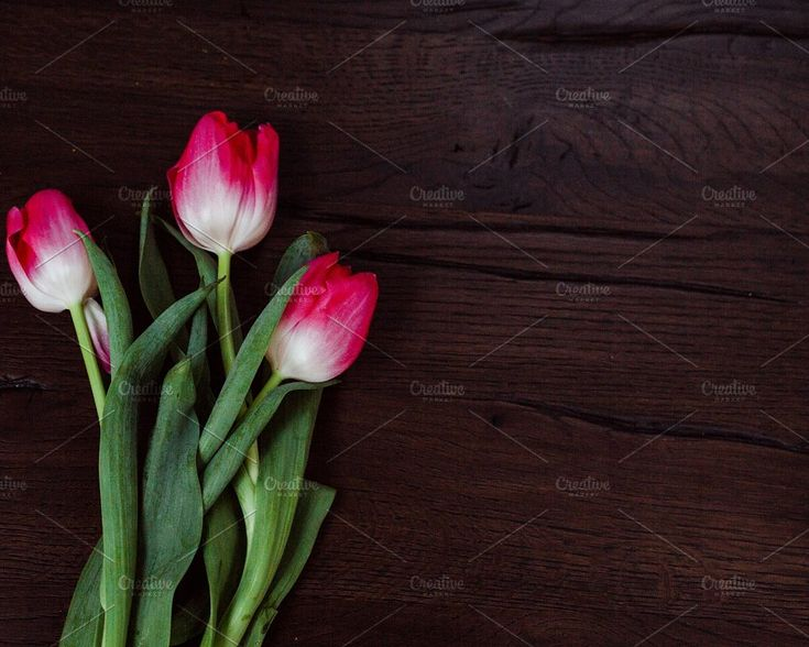 Floral Stock Photo   Dark Mood by RUE PARADIS STOCK on @creativemarket