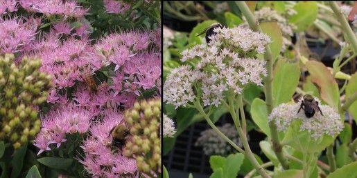 http://blog.behnkes.com/?s=bee