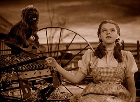 This Fan Theory From Reddit States that dorothy is the Wicked Witch of the East | moviepilot.com