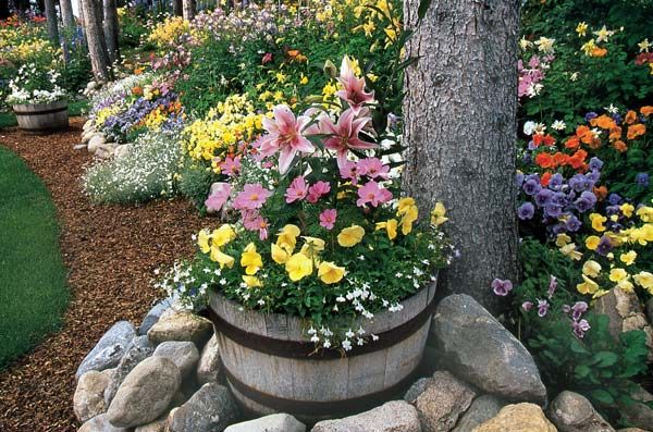 Like the flowers in the barrel