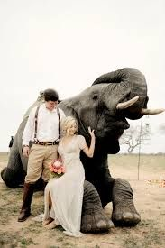 Image result for african safari