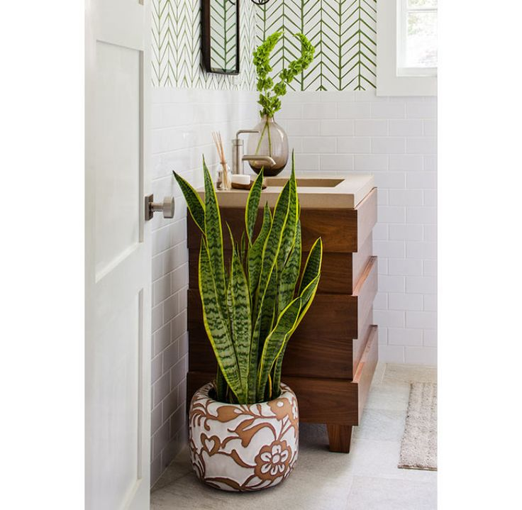 25 melhores ideias sobre plantas de sombra no pinterest for Plantas para interiores feng shui