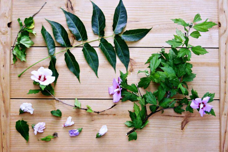 Flores de hibisco y ramas de fresno