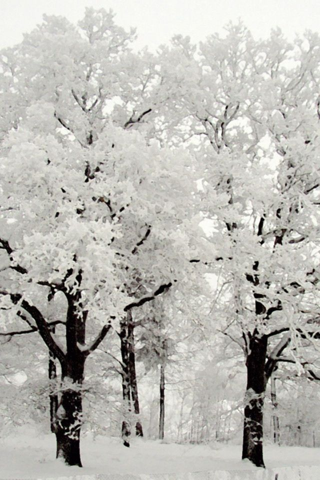 12 Enchanting Winter Wonderlands
